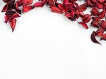 Samenvatting met droge rode bloemblaadjes op witte achtergrond Stock Fotografie