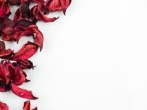 Samenvatting met droge rode bloemblaadjes op witte achtergrond Stock Foto's