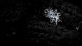 Samenvatting, sneeuwvlok op een donkere achtergrond Kerstmisachtergrond voor lay-out Het thema van Kerstmis stock afbeeldingen
