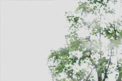 Samenvatting vaag beeld van groene gebladerteachtergrond royalty-vrije stock fotografie