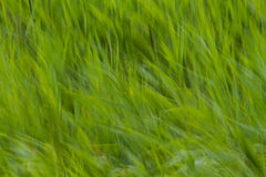 Samenvatting vaag gras Royalty-vrije Stock Afbeelding