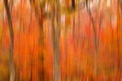 Samenvatting vage achtergrond. De herfstbomen Stock Foto