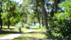 Samenvatting vage achtergronden die sleep in het groene bladpark wandelen stock footage