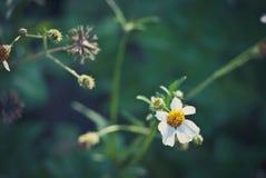 Samenvatting vage bloemachtergrond Royalty-vrije Stock Foto's
