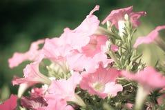 Samenvatting vage bloemachtergrond Royalty-vrije Stock Afbeeldingen