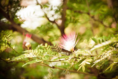 Samenvatting vage bloemachtergrond Stock Foto