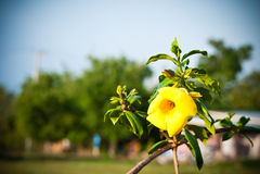 Samenvatting vage bloemachtergrond Royalty-vrije Stock Foto