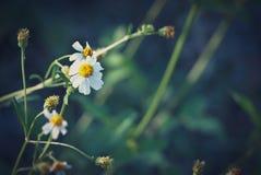 Samenvatting vage bloemachtergrond Stock Foto's