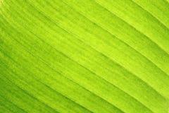 Samenvatting van banaanblad Stock Afbeelding
