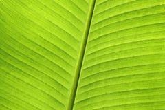 Samenvatting van banaanblad Royalty-vrije Stock Foto