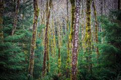 Samenvatting van bomen in een bos stock afbeeldingen