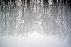 Bomen in Ijs worden weerspiegeld dat Royalty-vrije Stock Afbeelding