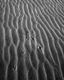 Samenvatting van de Kruising van de Sporen van de Vogel op Zand B&W Royalty-vrije Stock Afbeelding