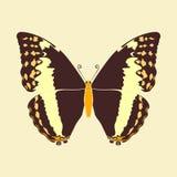 Samenvatting van de vlinder de bruine vleugel op uitstekende kleurenachtergrond Stock Foto