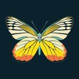 Samenvatting van de vlinder de gele vleugel op marineachtergrond Royalty-vrije Stock Foto's