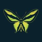 Samenvatting van de vlinder de groene vleugel op marineachtergrond Royalty-vrije Stock Afbeeldingen