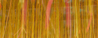 Samenvatting van de wortels. Stock Fotografie