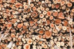 Samenvatting van eucalyptusbomen Stock Fotografie