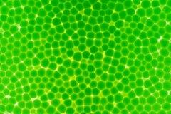 Samenvatting van het macroblad van het textuurschuim Royalty-vrije Stock Afbeelding