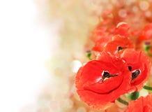 Samenvatting van kleurrijk papavergebied Royalty-vrije Stock Foto's