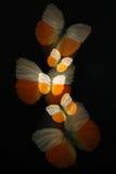 Samenvatting van vlinders met gezoem stock afbeelding