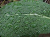 Samenvatting van waterdruppeltjes op blad Achtergrond Stock Afbeeldingen