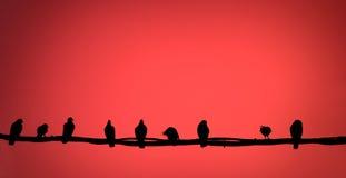 Samenvatting: vogel op een draad Royalty-vrije Stock Foto
