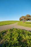 Samenvoegende Weg op groen landschap en blauwe hemel royalty-vrije stock fotografie