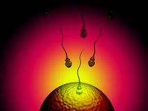 Samenzellen und Ei Lizenzfreie Stockbilder