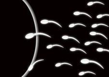 Samenzellen und Ei L Stockbilder