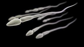 Samenzellenmakro auf dem schwarzen Hintergrund Stockfoto