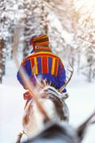 Sami man. Back view of Sami man at reindeer safari in a winter forest in Finnish Lapland Royalty Free Stock Photography