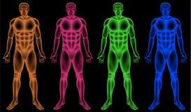 Samiec coloured bodies ilustracja wektor