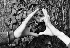 Samiec i żeńskie ręki stawiający wpólnie w kierowym kształcie Para w miłości blisko drzewa Obsługuje i kobiet ręki Fotografia Royalty Free