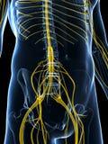 Samiec podkreślał nerwu system ilustracja wektor