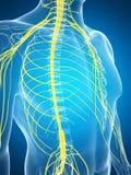 Samiec podkreślał nerwu system Zdjęcia Royalty Free