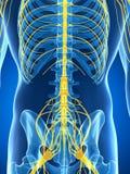 Samiec podkreślał nerwu system Zdjęcia Stock