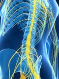 Samiec podkreślał nerwu system Obrazy Stock