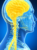Samiec podkreślał nerwu system royalty ilustracja