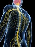 Samiec podkreślający nerwu system Zdjęcie Royalty Free