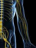 Samiec podkreślający nerwu system royalty ilustracja