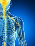 Samiec podkreślający nerwu system Zdjęcie Stock
