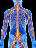Samiec podkreślający nerwu system Obrazy Royalty Free