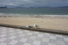 Samil beach, Vigo Spain Stock Image