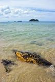 Samila strand med Noo och Maew öar Royaltyfria Foton