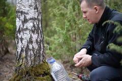 Samla fruktsaft från björkträd arkivbilder