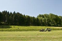 samla gräs Royaltyfria Bilder
