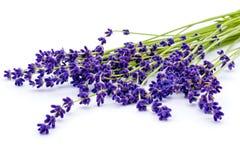 samla ihop blommor isolerad lavendelwhite Calmness och avkoppling arkivfoto
