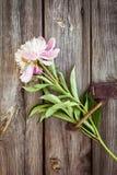 Samla ihop buketten av rosa pioner på en träbakgrund blommar fractalramillustrationen Arkivfoton