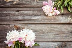 Samla ihop buketten av rosa pioner på en träbakgrund blommar fractalramillustrationen Arkivbilder